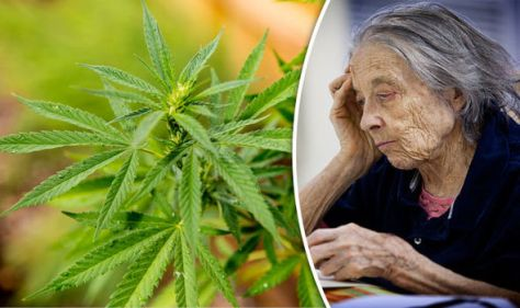 compounds-in-cannabis-could-be-used-to-treat-alzheimer-s-685214