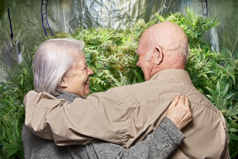 elderly_marijuana